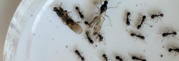 Ants field work starts